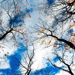 Ontario Sky